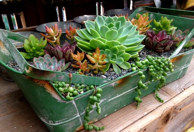 succulent delivery